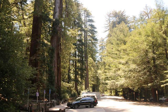Sempervirens_Falls_011_04222019 - Looking towards some handicapped and employee parking spaces on the south side of Park Headquarters, which were right in front of the Sequoia Trail that we took towards Sempervirens Falls