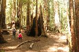 Sempervirens_Falls_064_04222019 - Julie and Tahia checking out more photo ops at this grove of redwood trees at the Watashi Campground