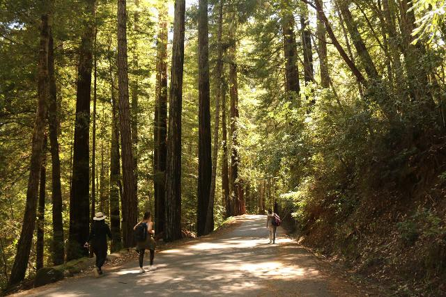 Sempervirens_Falls_127_04222019 - Walking the Sky Meadow Drive back towards Park Headquarters