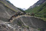 Sendero_Torres_del_Paine_227_12252007 - Horse train headed to Alb. El Chileno
