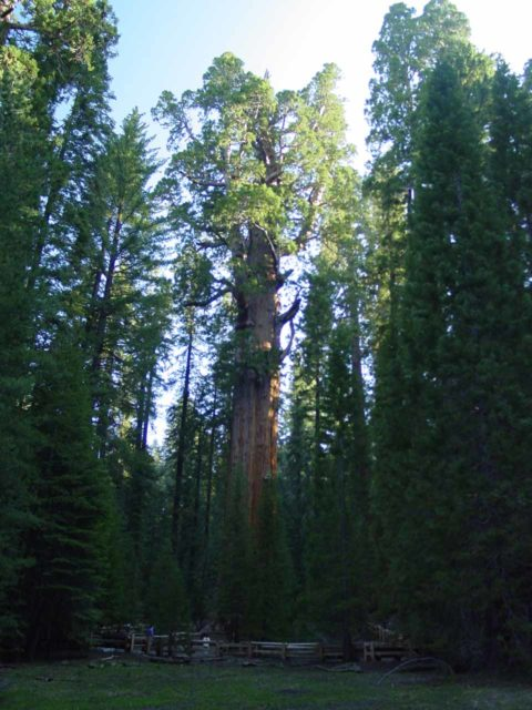 Sequoia_006_05282005 - The Giant Forest was further up the twisty Generals Highway from the turnoff for Mineral King by Three Rivers.  Pictured here is the General Sherman Tree, the main sequoia tree feature of this grove