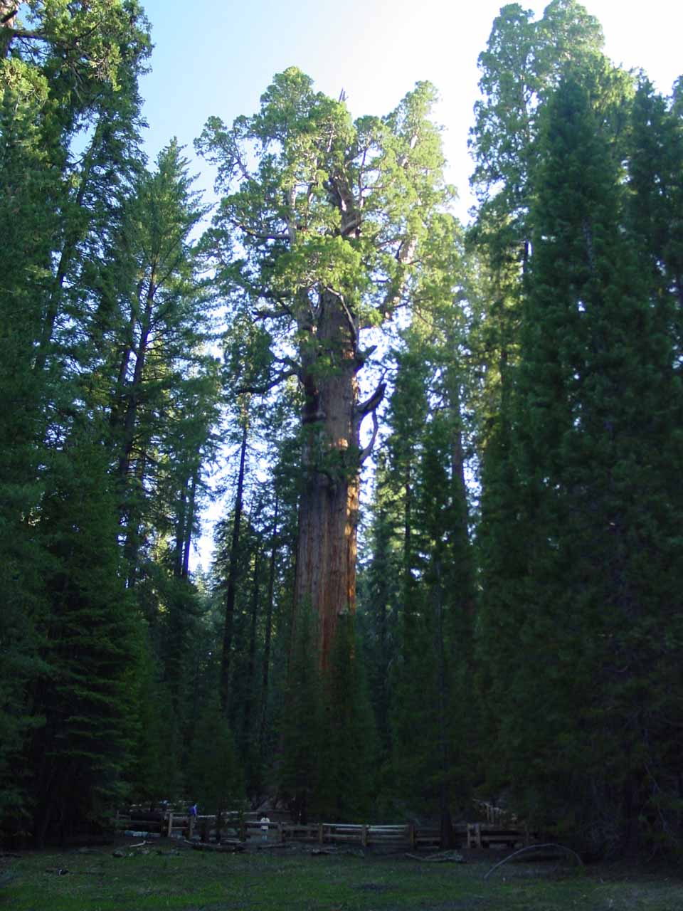 Also the south of Lodgepole was the Giant Forest, which featured the General Sherman Tree - the largest one in Sequoia National Park