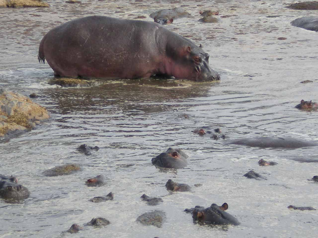 One of many hippo pools