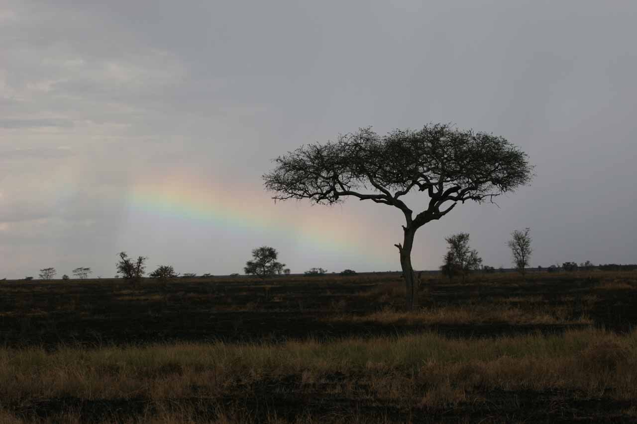 A rainbow we didn't expect to see in the Serengeti