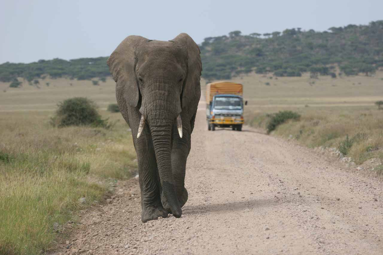 Scary moment as the elephant was walking towards us