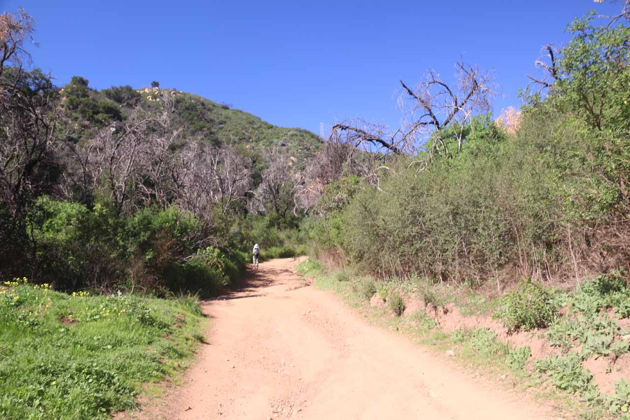 The dirt trail continued to go uphill flanked by some burnt trees