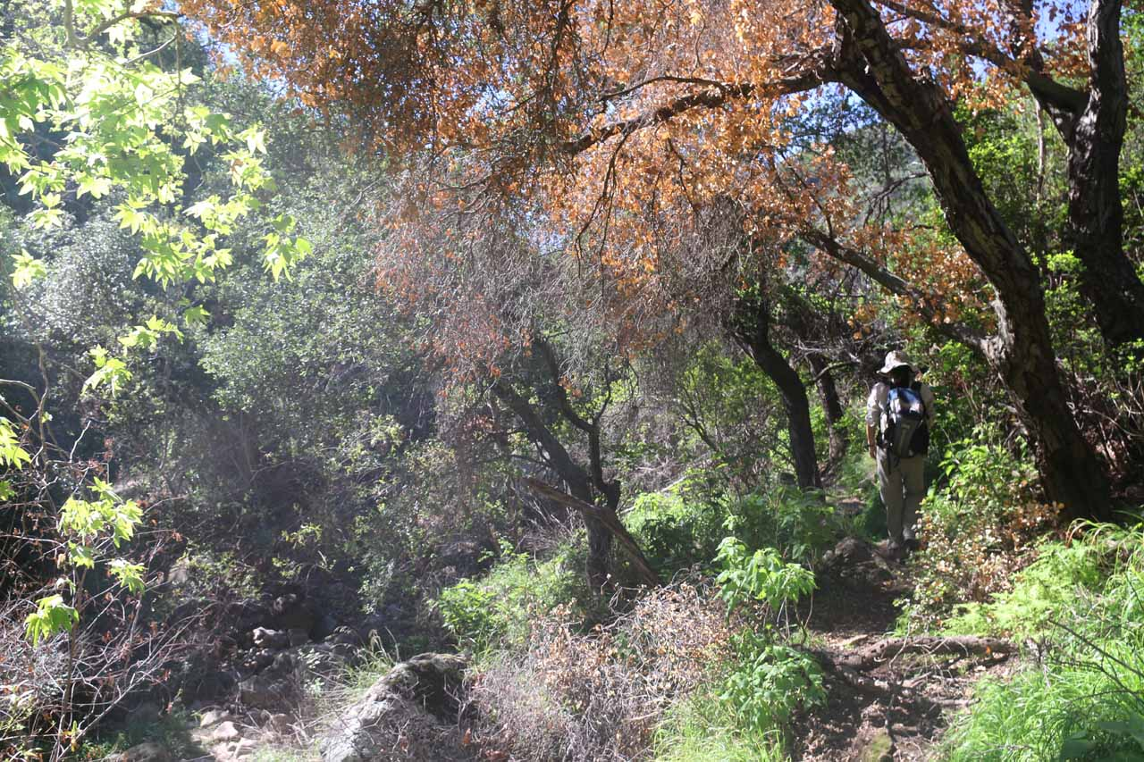 Julie scrambling in the bush as we made our way back