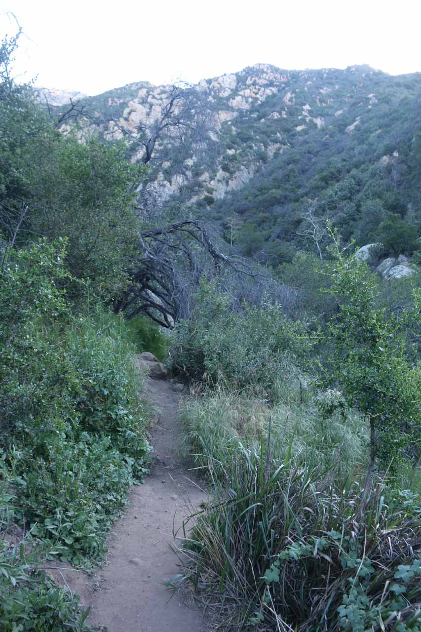 This was the somewhat overgrown but obvious trail that I was able to follow for quite a ways alongside Mission Creek
