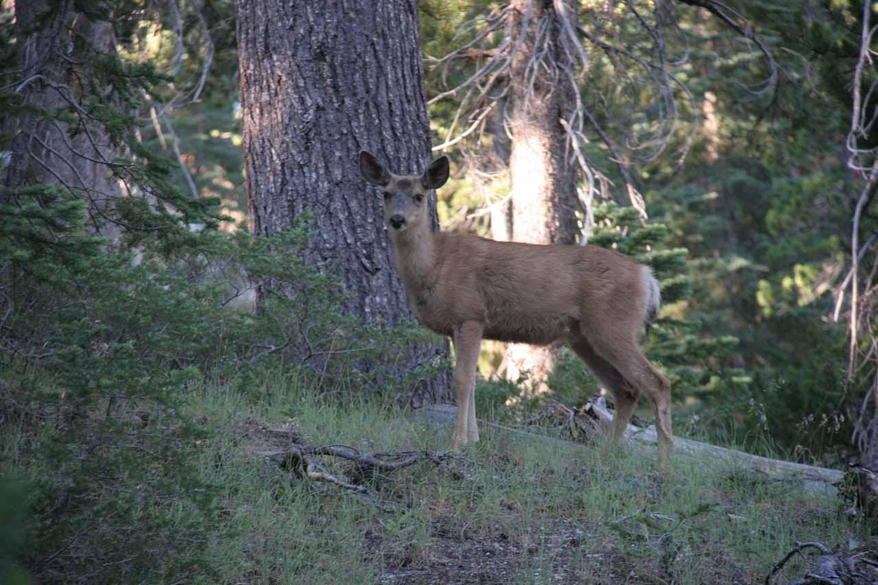 Another deer