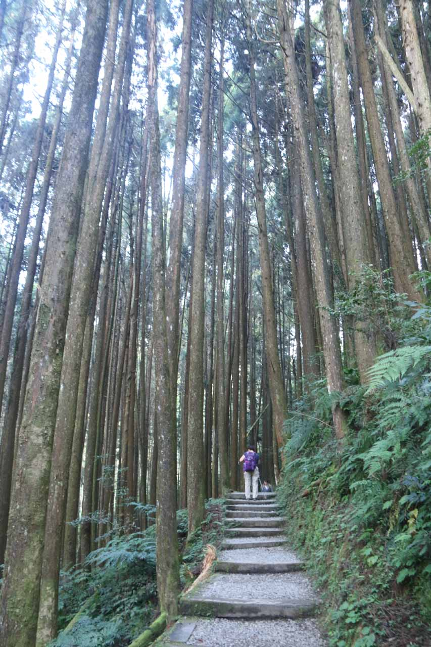 Mom hiking amongst some tall trees while on the Chunlin Trail