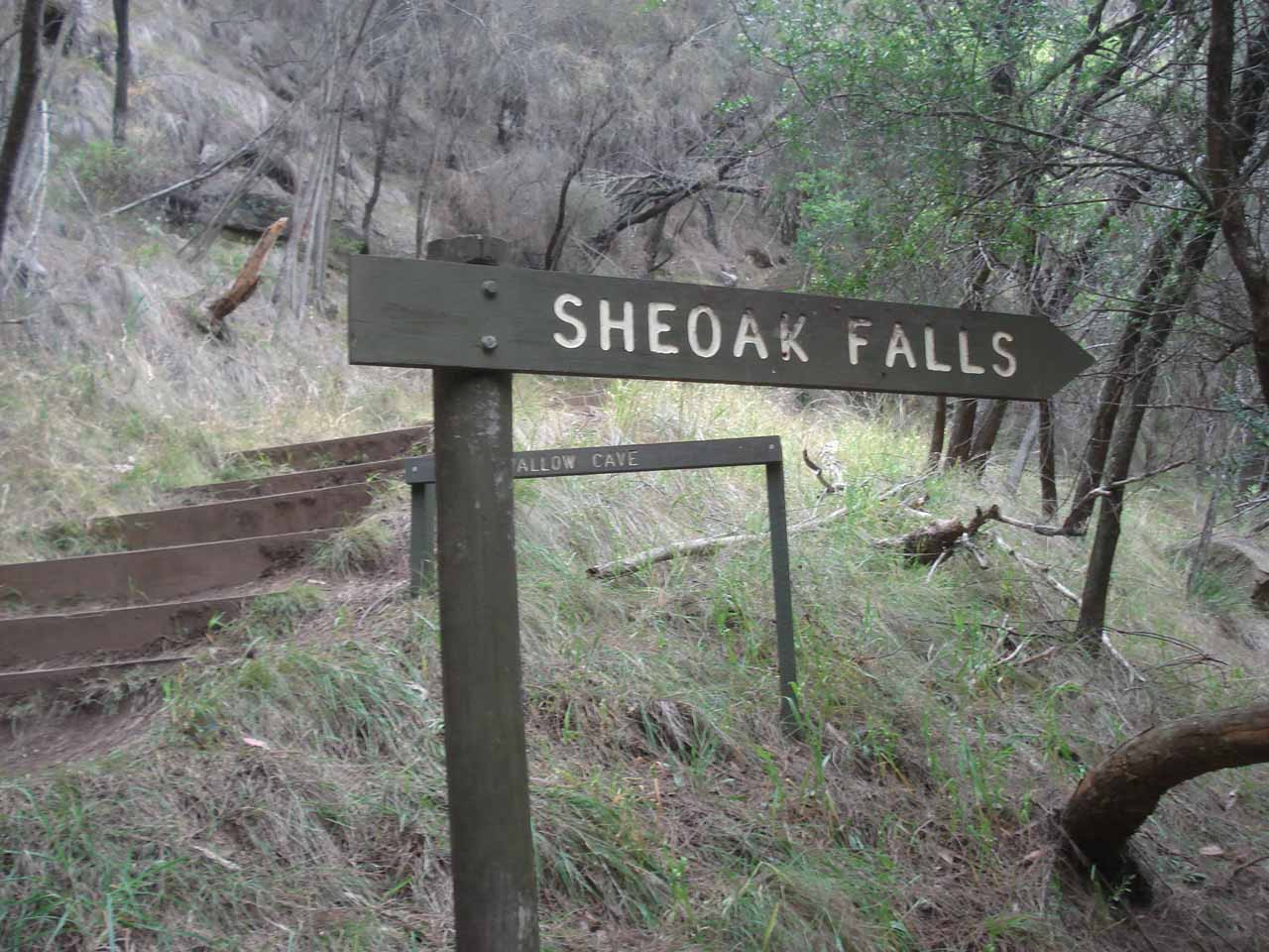 Going up the steps for the Sheoak Falls Track