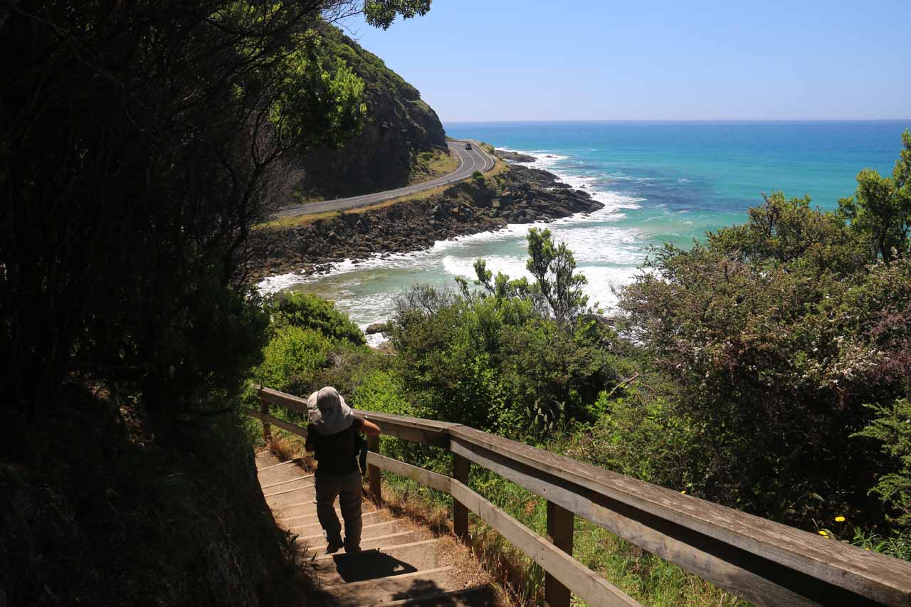 Context of the Shoeak Falls hike and the Great Ocean Road as the track descended towards the wetlands