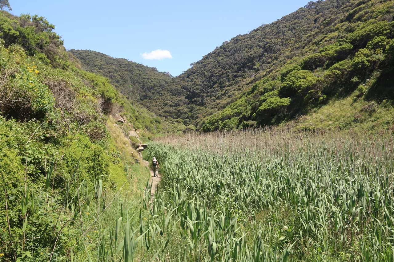 Julie hiking alongside the wetlands part of the Sheoak Falls Track