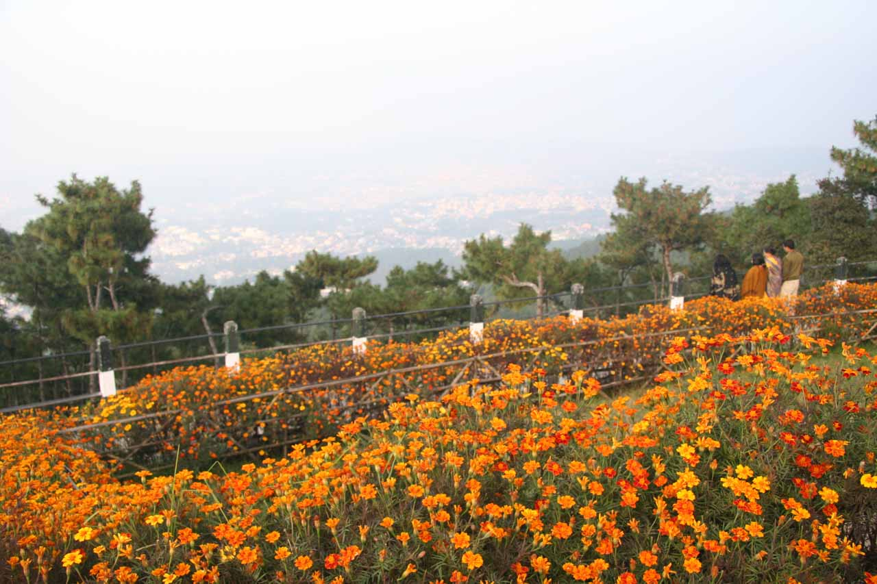 Wildflowers blooming before the hazy view of Shillong