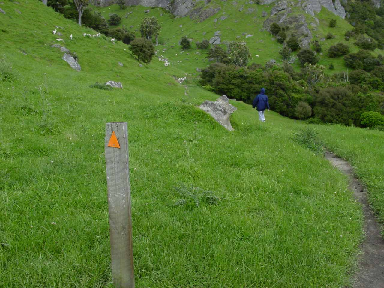 Julie following the poles guiding us through the paddock to the Boundary Stream Scenic Reserve