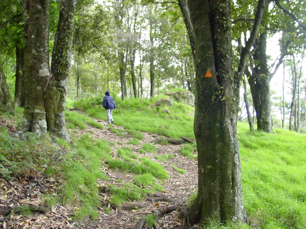Beyond the paddock, Julie and I continued following the arrows into a lightly forested area towards the Boundary Stream Scenic Reserve