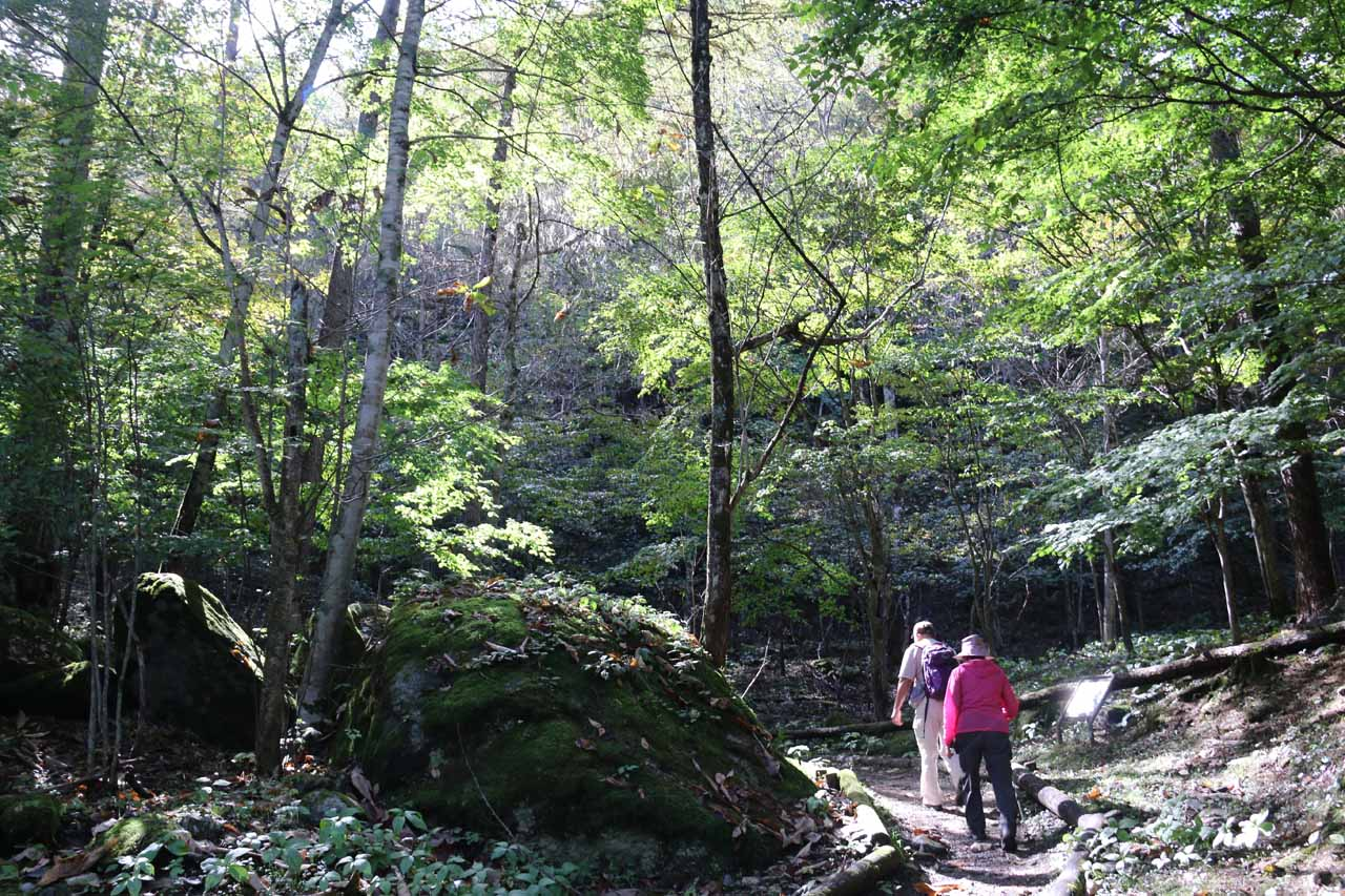 Initially, the Shoji Falls Trail was pretty straightforward to follow as the trail was well-defined and mostly flat
