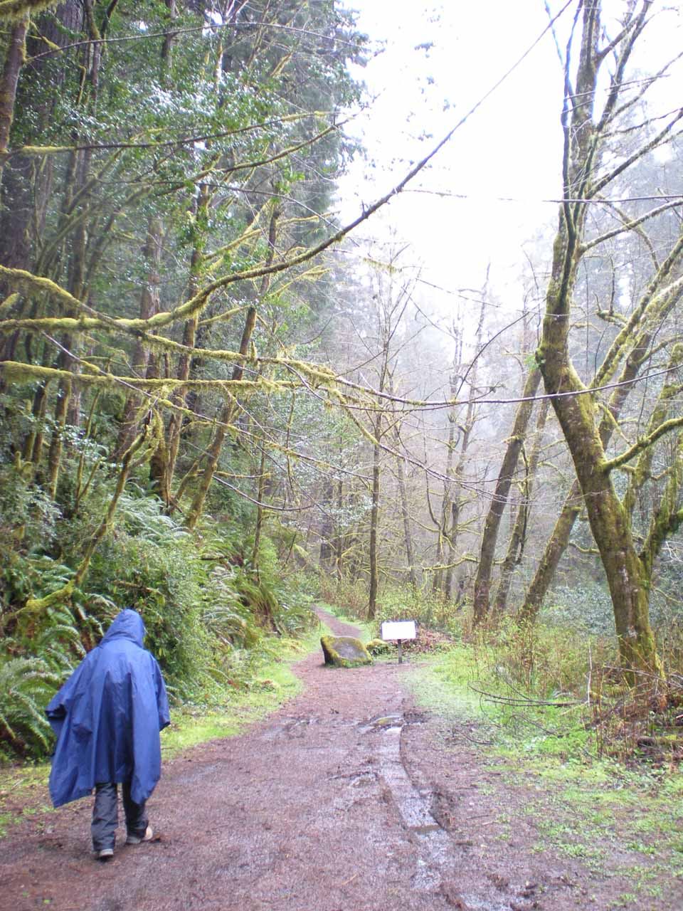 Embarking on the short muddy trail to Silver Falls