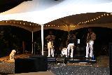 Sinalei_Reef_Resort_079_11122019 - A local dog enjoying the Big Wave concert at the Sinalei Reef Resort