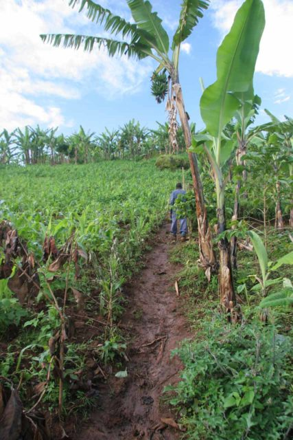 Sipi_Falls_085_06162008 - Going up a very muddy section of a track that appeared to go through someone's plantation somewhere between the second and third Sipi Falls
