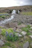Sjavarfoss_005_06212007 - Context of some purple wildflowers fronting the stream and the Sjávarfoss waterfall