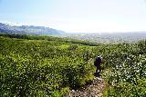 Skaftafell_NP_260_08082021 - Mom descending amongst the vegetation as she was getting closer to the busy Svartifoss Trail from Sjonarsker