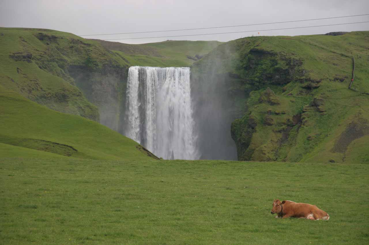 Further to the east on the Ring Road from Gljúfurárfoss and Seljalandsfoss was the famous Skogafoss one of Iceland's signature waterfalls
