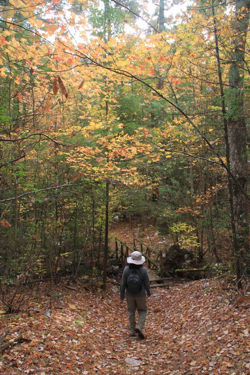 Trail still gradually descending