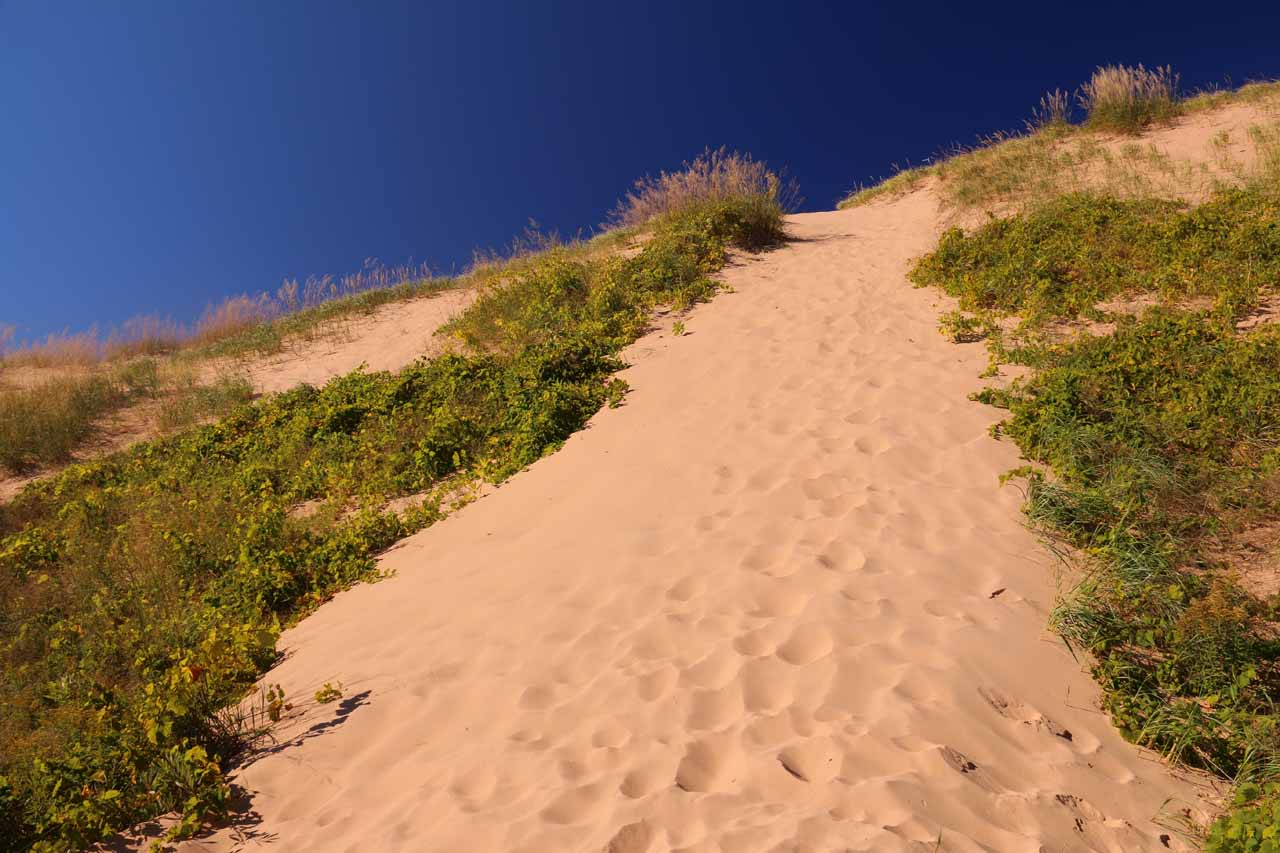 A part of the Sleeping Bear Dunes where there was a measuring stick showing how far the dunes have traveled