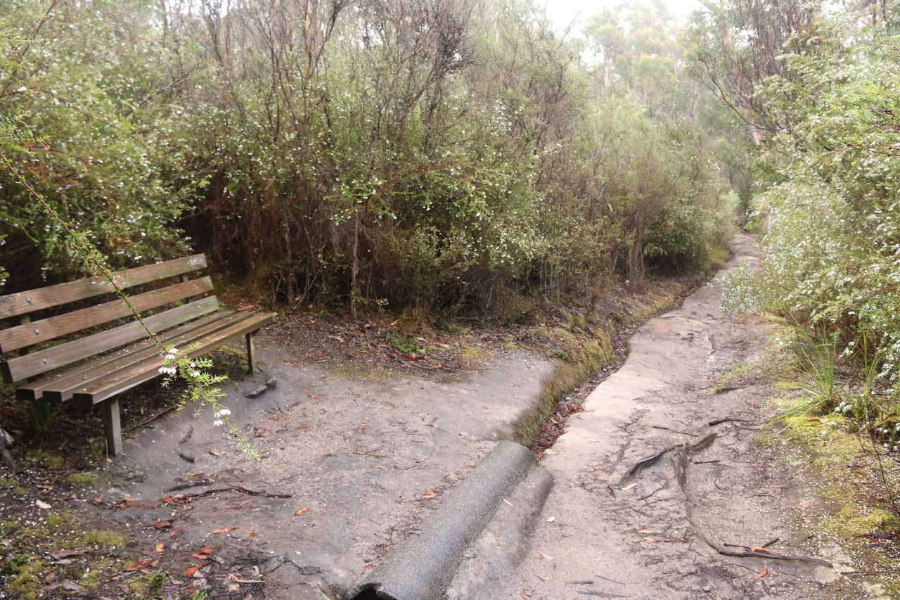 Some rest benches were set up along the Snug Falls Track, which might come in handy on the mostly uphill return hike