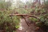 Snug_Falls_17_024_11272017 - On my second visit to Snug Falls in November 2017, I encountered some fallen trees though they were fairly trivial to get by
