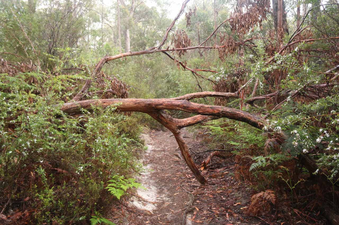 On my second visit to Snug Falls, I encountered some fallen trees though they were fairly trivial to get by