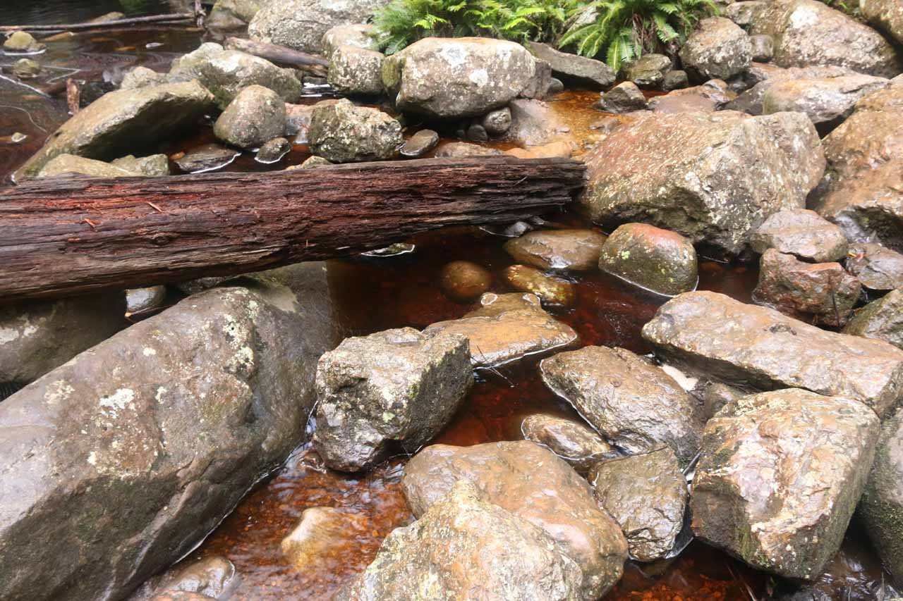 A closer look at the water in the Snug River revealed the maroon-like tanin-stained colour