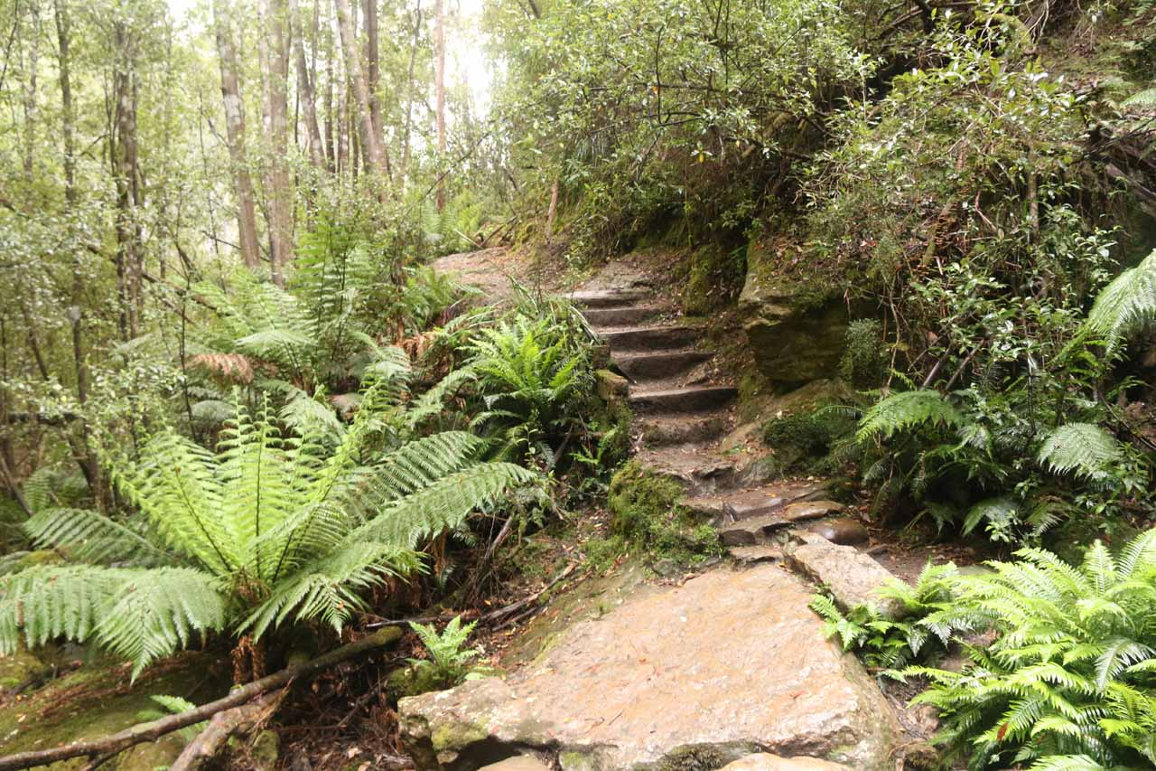 After having my fill of Snug Falls, I started the uphill climb back to the car park
