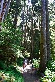 Sol_Duc_Falls_029_06222021 - Julie and Tahia going by some other hikers while surrounded by giant trees en route to Sol Duc Falls