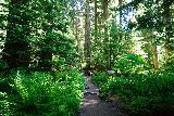 Sol_Duc_Falls_038_06222021 - Julie traversing through an especially fern-rich part of the rainforest en route to Sol Duc Falls