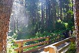Sol_Duc_Falls_044_06222021 - Approaching the footbridge fronting Sol Duc Falls