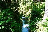 Sol_Duc_Falls_064_06222021 - Looking downstream from the muddy footbridge before the Sol Duc Falls
