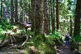 Sol_Duc_Falls_109_06222021 - Context of the CCC shelter and the Soleduck Trail near Sol Duc Falls