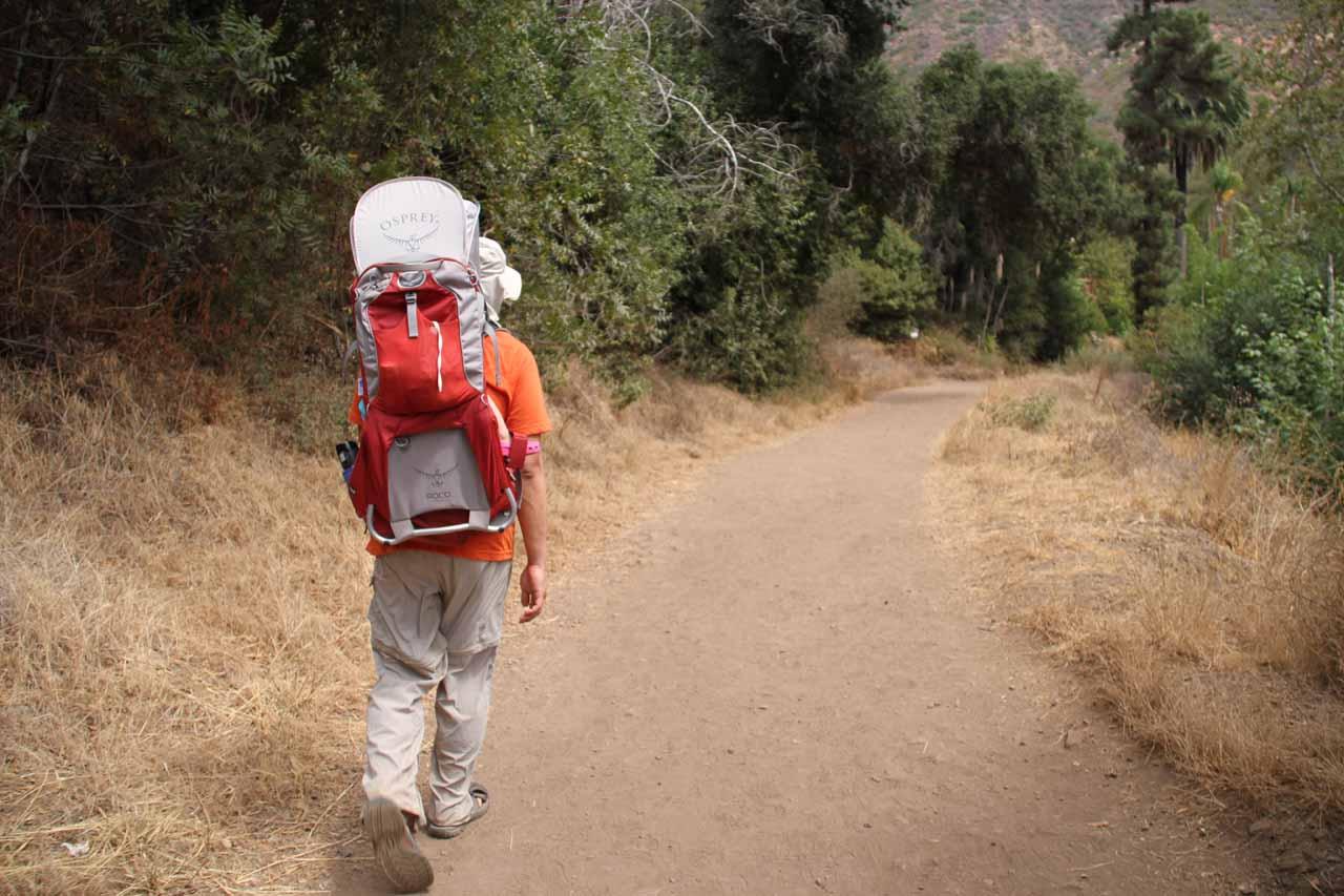 Still giving Tahia a joy ride on the trail