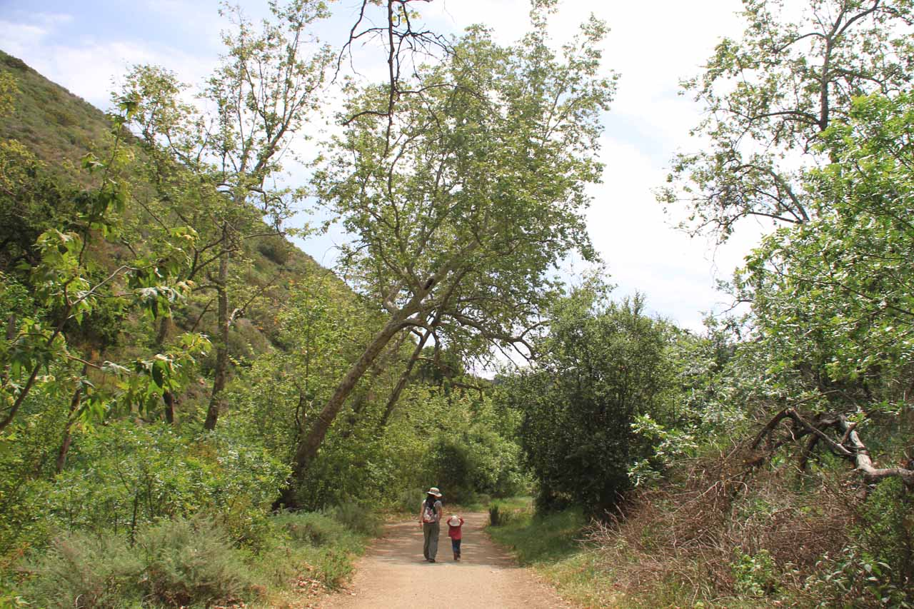 Julie and Tahia hiking beneath a trio of leaning trees that I wasn't sure if they were on the verge of falling or not