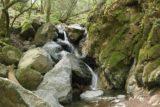 Sonoma_Creek_Falls_050_05222016 - Contextual look at Sonoma Creek Falls