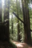Sonoma_Creek_Falls_072_05222016 - Flanked by more tall coastal redwood trees as I was getting close to the other end of the trail by Adobe Canyon Road