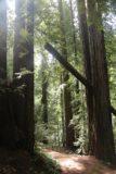 Sonoma_Creek_Falls_072_05222016
