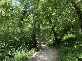 Spearfish_Canyon_020_iPhone_07302020 - Descending the busy trail leading into Spearfish Canyon and eventually to the base of Spearfish Falls