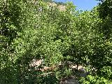 Spearfish_Canyon_022_iPhone_07302020 - Approaching the bottom of the descent into Spearfish Canyon on the trail leading to the base of Spearfish Falls