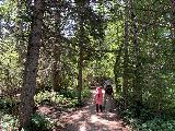 Spearfish_Canyon_037_iPhone_07302020 - Julie and Tahia going back into the forest cover as we were nearing the end of the short hike to the base of Spearfish Falls