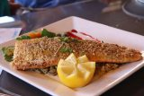 Spotted_Dog_Cafe_007_04052018 - The pumpkin seed crusted non-farmed trout served up at the Spotted Dog Cafe