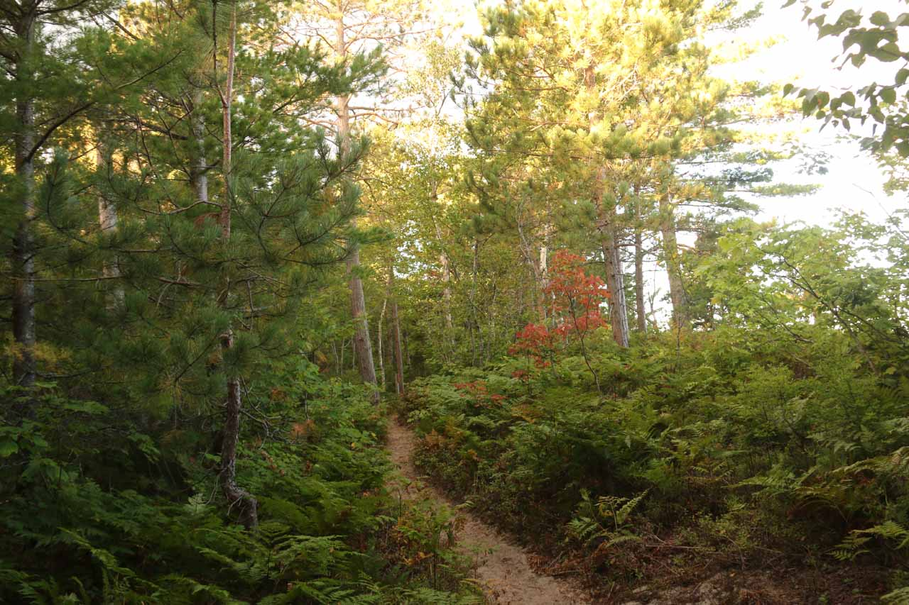 Most of the 2.6-mile stretch along the North County Trail to Spray Falls were flanked by dense foliage with limited views towards the vast Lake Superior
