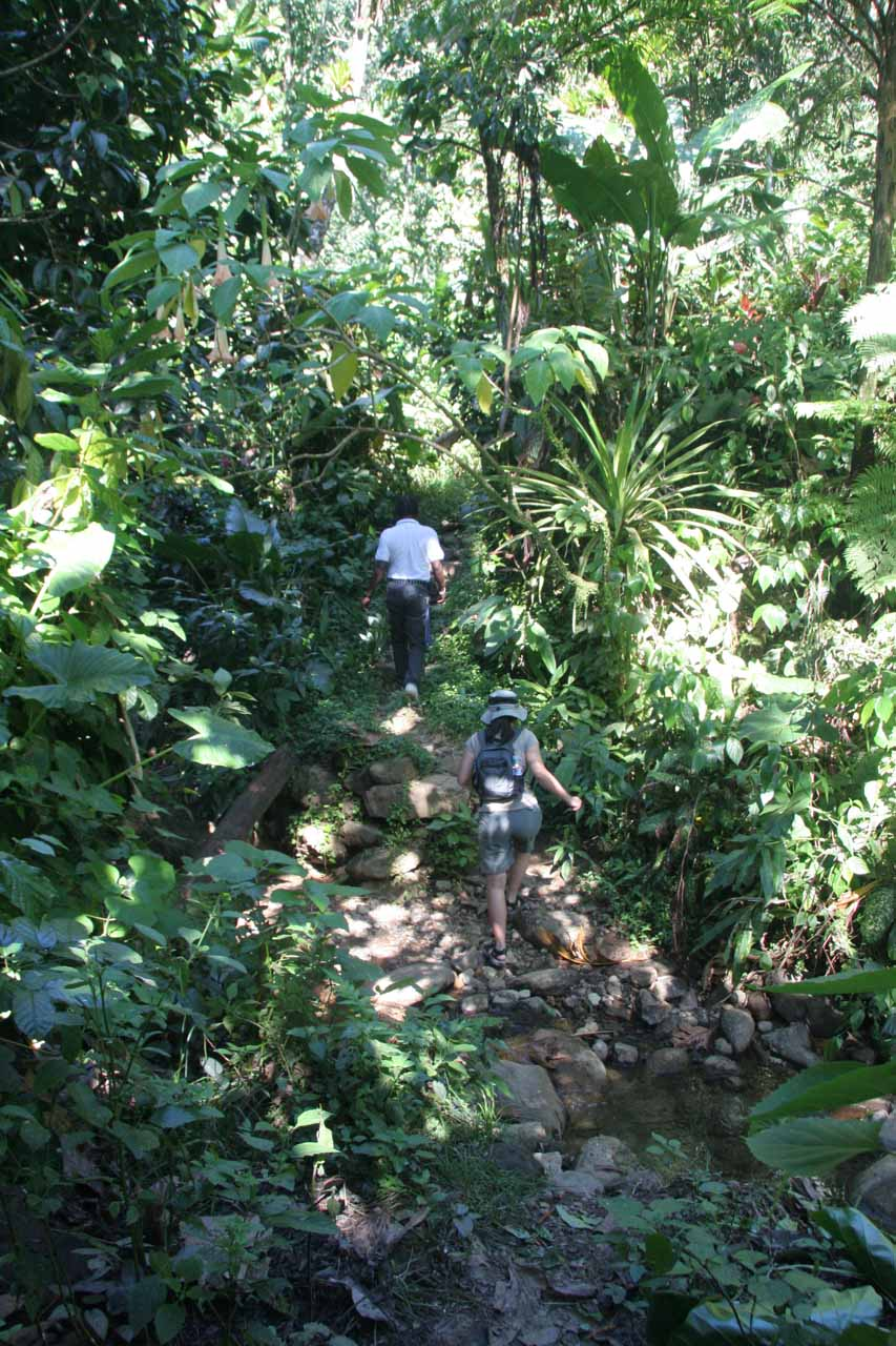 Peter Simon leading us through an overgrown path to the falls